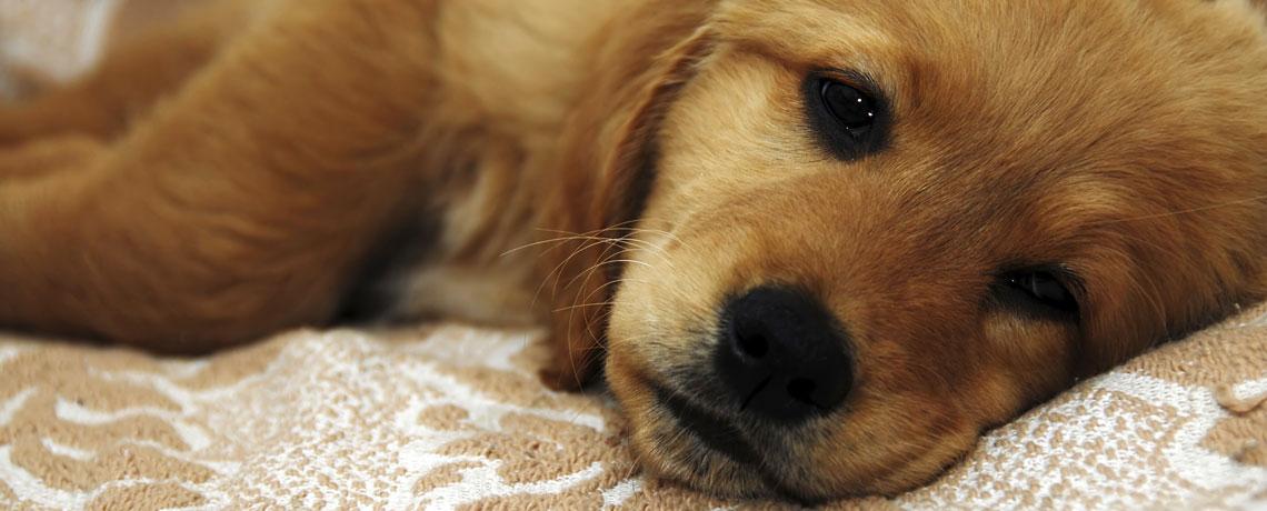 La santé de votre animal vous inquiète?
