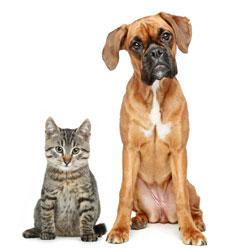 Pensions pour chiens et chats